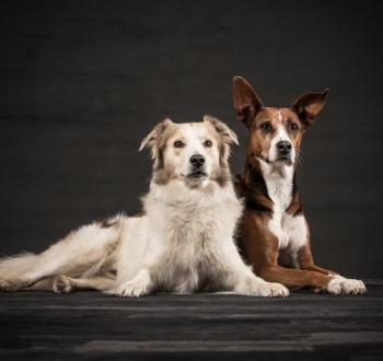 Timo-und-Lola